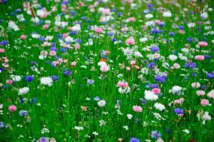 fleurs-esplanade1.jpg